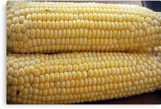 corn by AravindTeki