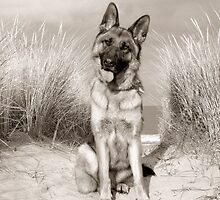 German Shepherd at the Beach by Wendy Mitchell