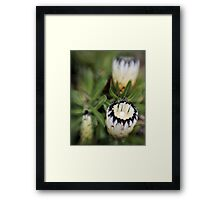 White Protea with Lensbaby Framed Print