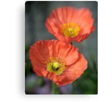 Orange Poppys with Lensbaby Canvas Print