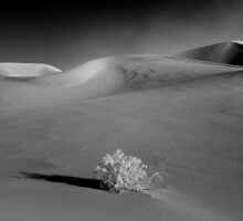 Looming Dust Storm on the Dunes by Zane Paxton