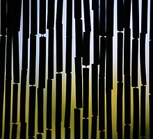 Bamboo Dreams by transcentral