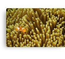 Nemo on Yellow Canvas Print