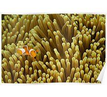 Nemo on Yellow Poster