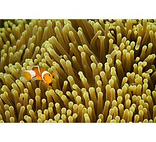 Nemo on Yellow Photographic Print