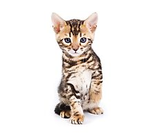 Cute striped ginger kitten Photographic Print