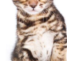 Cute striped ginger kitten Sticker