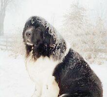 A Snowy Day by IowaArtist