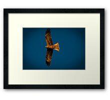 The Hawks Framed Print
