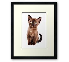Brown kitten Framed Print