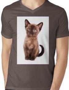 Brown kitten Mens V-Neck T-Shirt