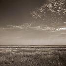 Serengeti Plains, 2009 by Sarah Mackie