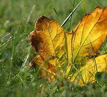 The colour of Autumn. by bared