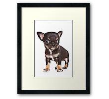 BROWN Chihuahua puppy Framed Print