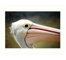 Portrait of a Pelican Art Print