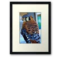 Tiny Bird ~ Part Two Framed Print