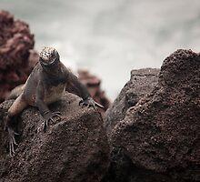 Red Land Iguana by becks78