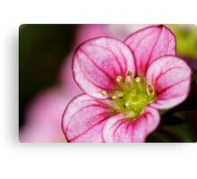 Macro pink flower Canvas Print