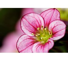 Macro pink flower Photographic Print