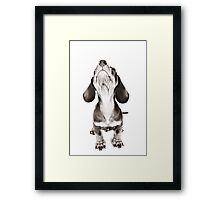 Funny dachshund with a big nose Framed Print