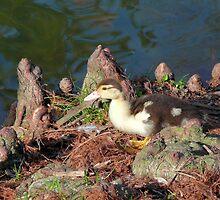 Li'l Duckie's Wonderland by Marita Sutherlin