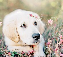 Golden retriever puppy among flowers by wandererswolves