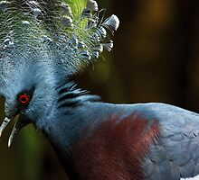 Victoria Crowned Pigeon and... by Dominika Aniola
