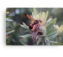 Wasp collecting pollen. Metal Print