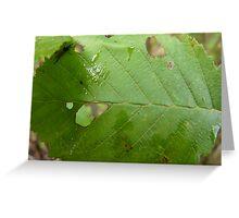 Holy Leaf Greeting Card