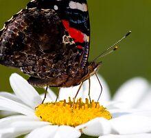 Butterfly on a Flower by larrabeephoto