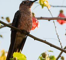 Humming Bird by Jarede Schmetterer