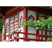 Pagoda and tree Photographic Print