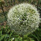 Flower Close-Up, Queens Botanical Garden, Flushing, New York by lenspiro