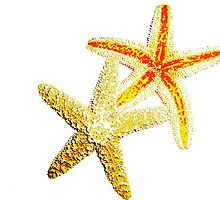 Starfish Gazing  by beresfordphotos