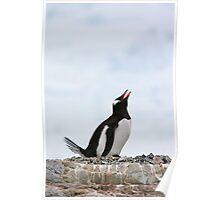Gentoo penguin Poster