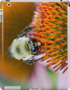 Bee on an Echinacea Flower by Diana Beato