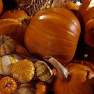 Shadows On The Pumpkins by Linda Miller Gesualdo