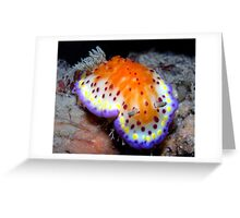 Bright and Colourful Nudibranch Greeting Card