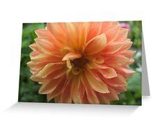 Peach Dahlia Greeting Card