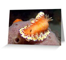 Collingwood's Nudibranch Greeting Card