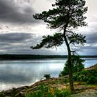 Lone pine by tanmari
