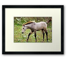 Young and Playful in the meadows of Springtime.... Framed Print