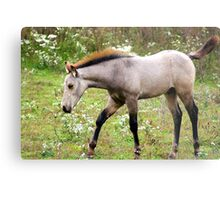Young and Playful in the meadows of Springtime.... Metal Print