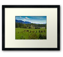 Cows Grazing In The Pasture Framed Print
