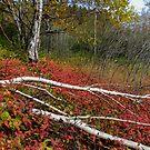 Sugarloaf Cove - Schroeder Minnesota by loralea