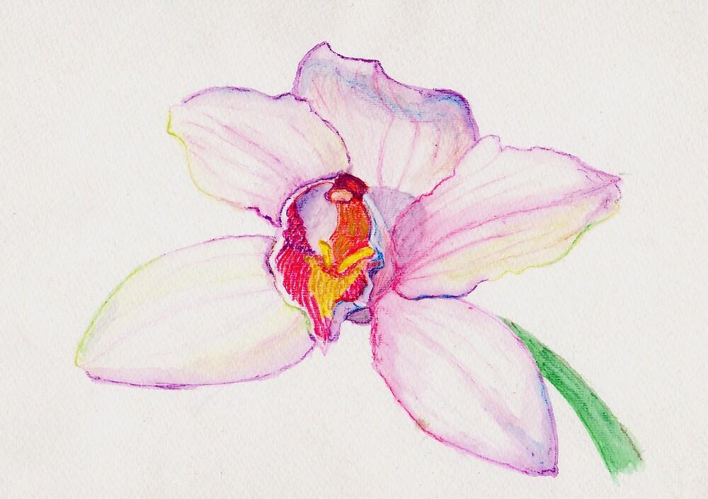 Cymbidium Orchid by Marilyn Brown