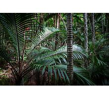 Norfolk Island: Green Haven Photographic Print
