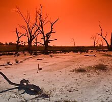 Feeling the Drought by Darryl Leach