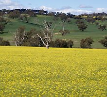 COWRA - YASS AREA  2009 - 10 by Sharon Robertson