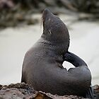 sea creatures #4, southern fur seal by stickelsimages